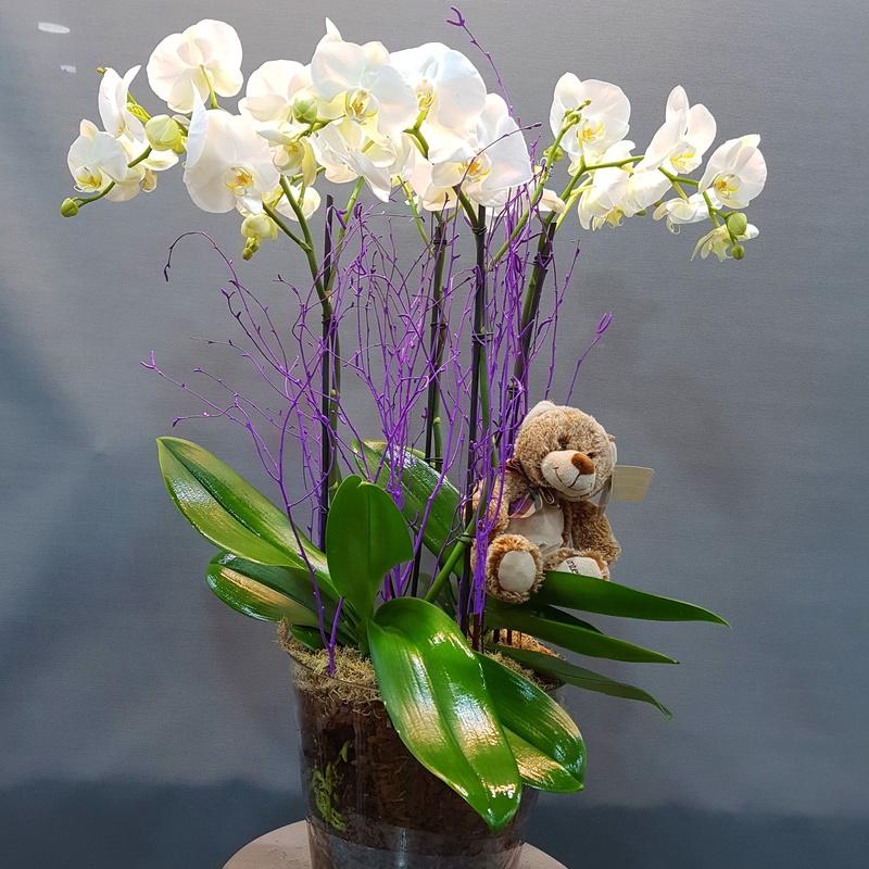 orquídea en base de cristal 72,00€