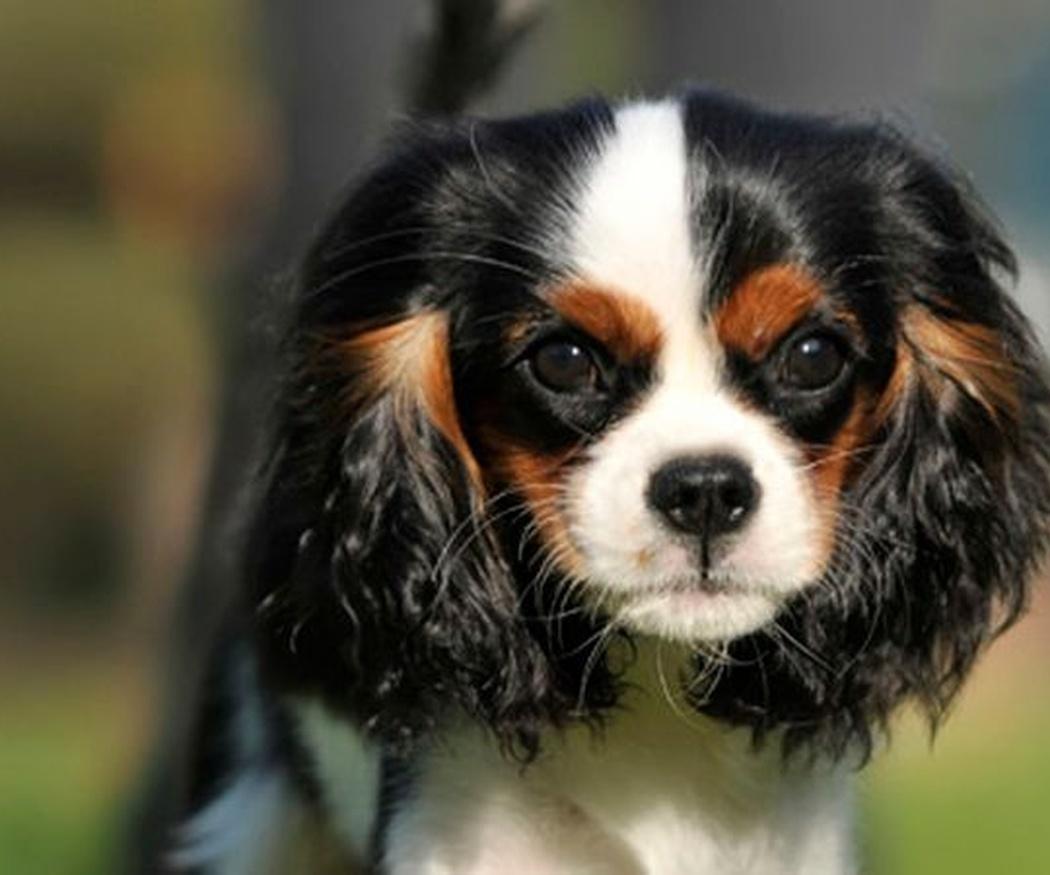Consejos para cuidar a tus mascotas
