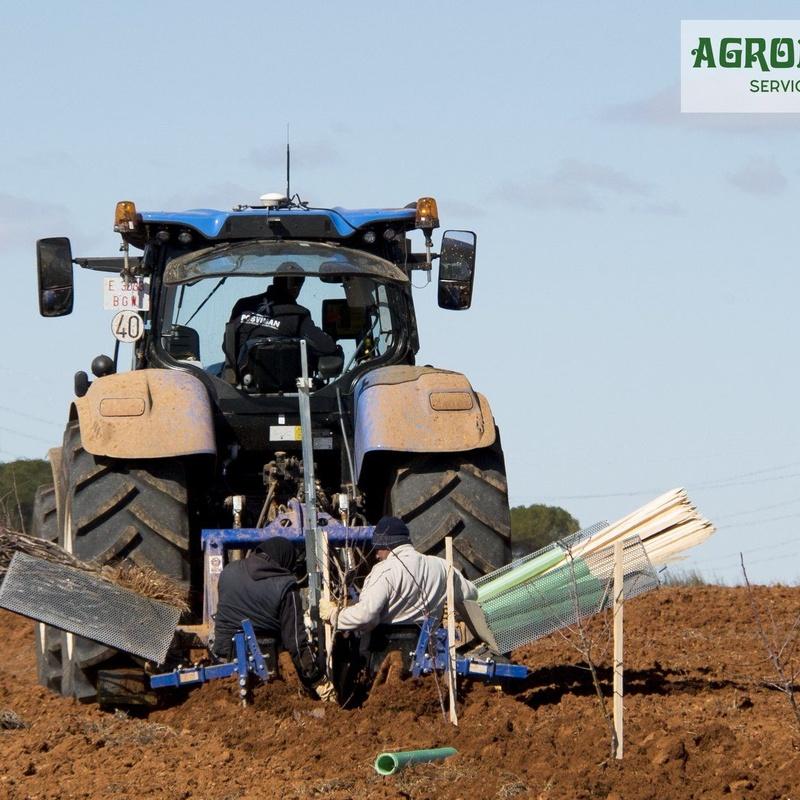 Sistema de mecanización en la plantación: Servicios de AGROManchuela