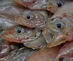 Galería de Pescaderías en Basauri | Servicio Horeca