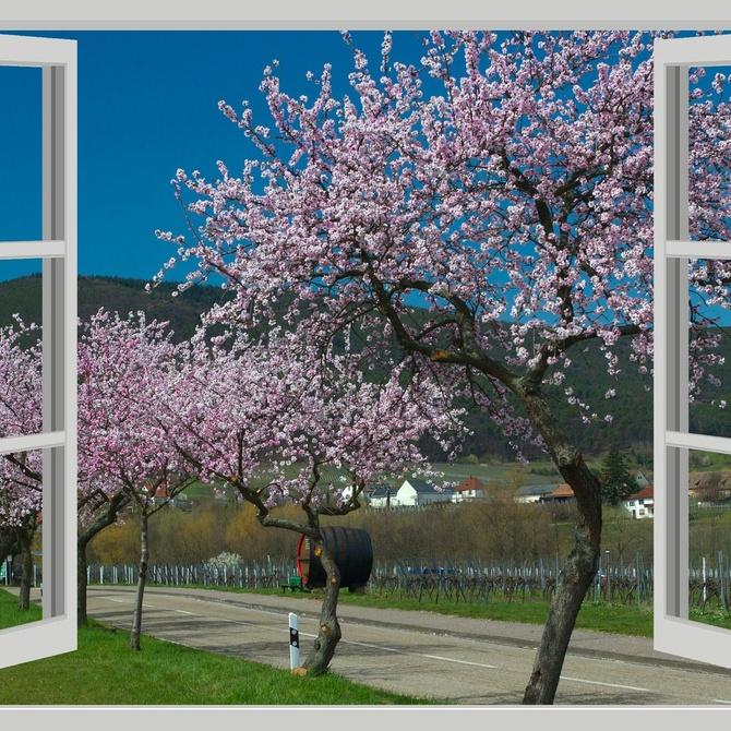 Las ventanas de aluminio: el mejor aliado para respetar el medio ambiente