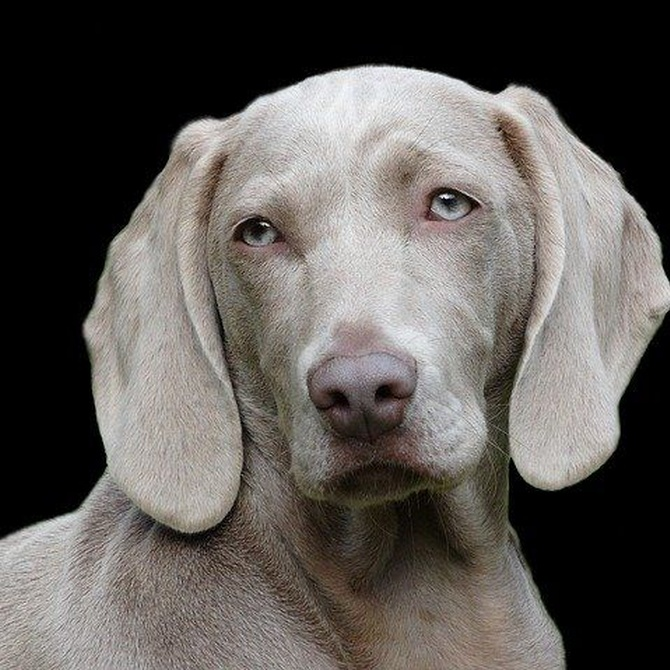 Mi perro olfatea demasiado, ¿es normal?