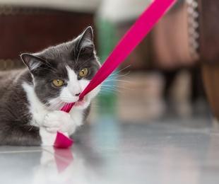 Jugar con tus gatos