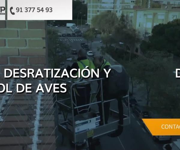 Control de plagas en Madrid centro | CTP