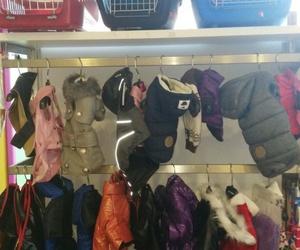 Transporting y moda para mascotas
