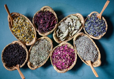 Plantas medicinales G