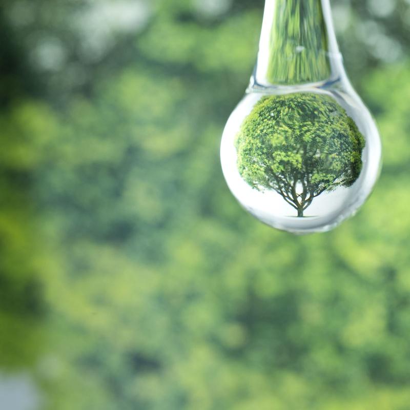 Terapias Naturales: Productos y Áreas de Negocio de Montico Consultores