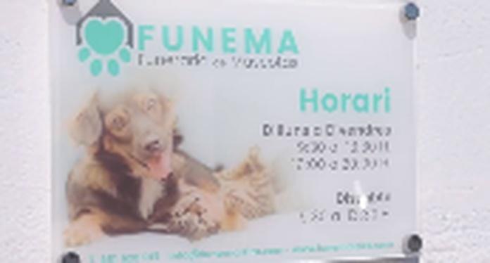 FUNEMA-ALZIRA.mp4