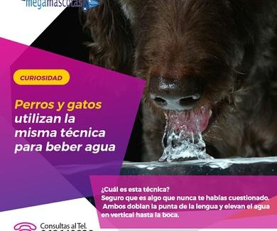 ¿Que técnica utilizan los perros y gatos para beber agua?
