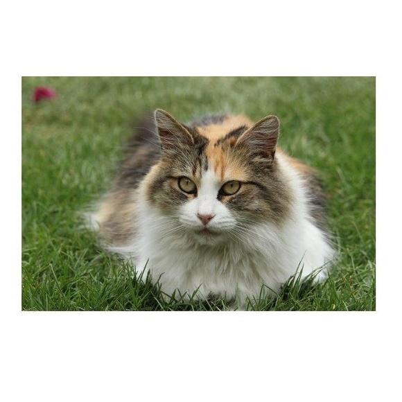 Un gato con suerte