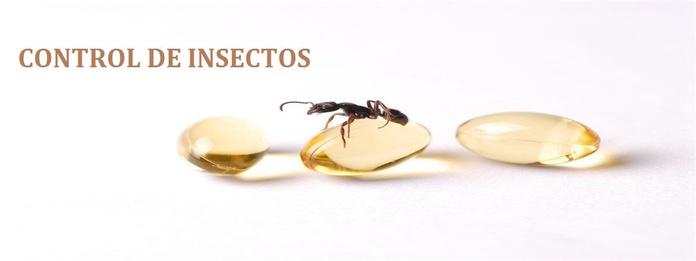 Desinsectación: Servicios especializados de Sunet Plagas