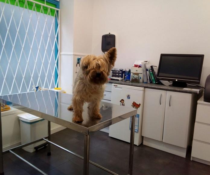 Vacunaciones: Servicios veterinarios de C. V. Gabriel Usera