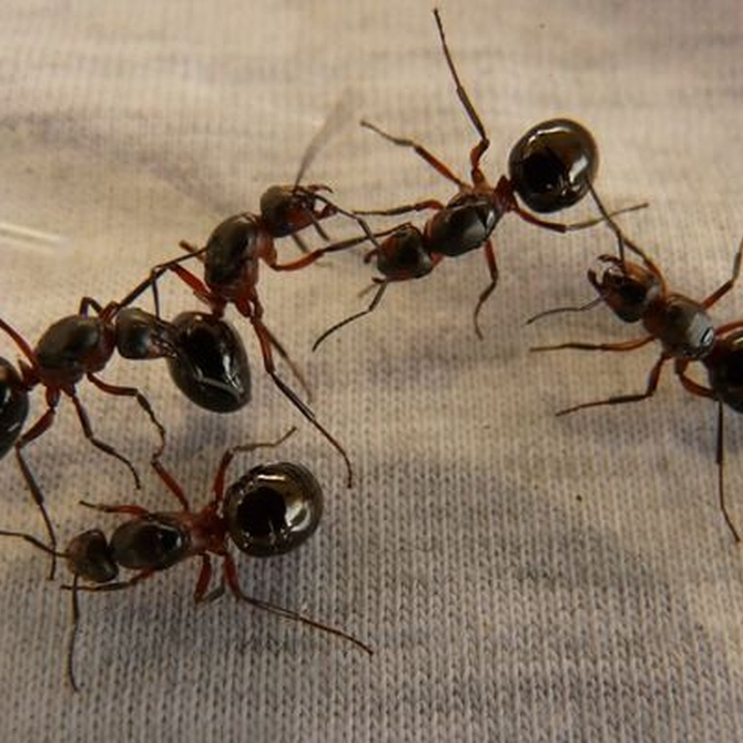 ¿Cómo evitar que aparezcan hormigas en la cocina?