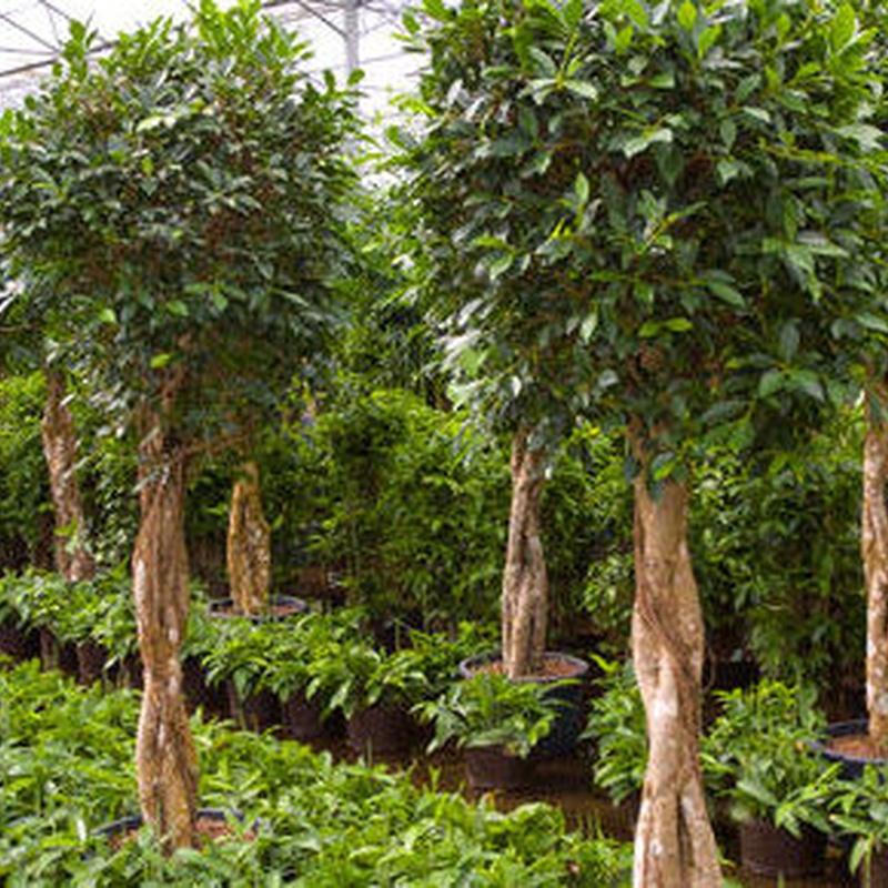 Plantas : Productos y servicios   de AQUAPLANT DISSENY VERD, S.L.