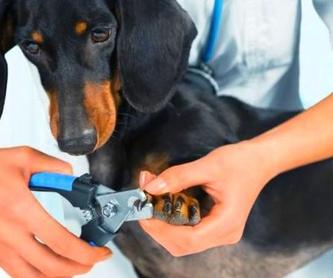 guarderia canina: Servicios de Compañeros Tienda De Mascotas