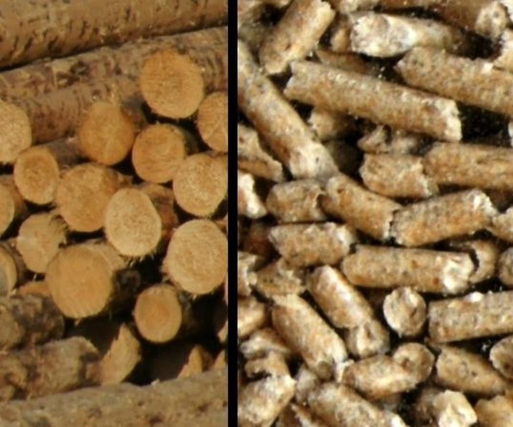Cómo identificar pellets de calidad