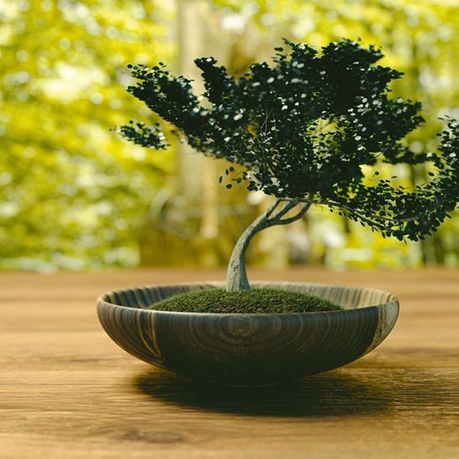 Guía sobre el cuidado de los bonsáis