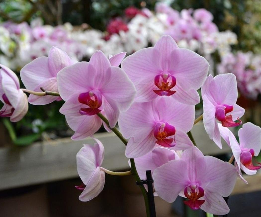 Aprende cómo cuidar las orquídeas
