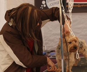 Claves para cortar el pelaje de los perros