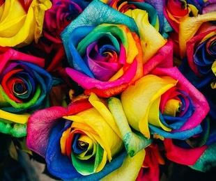 El significado de los colores de las flores