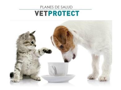 Planes de salud para tu perro