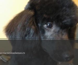 Peluquería canina en Terrassa | Dama´s