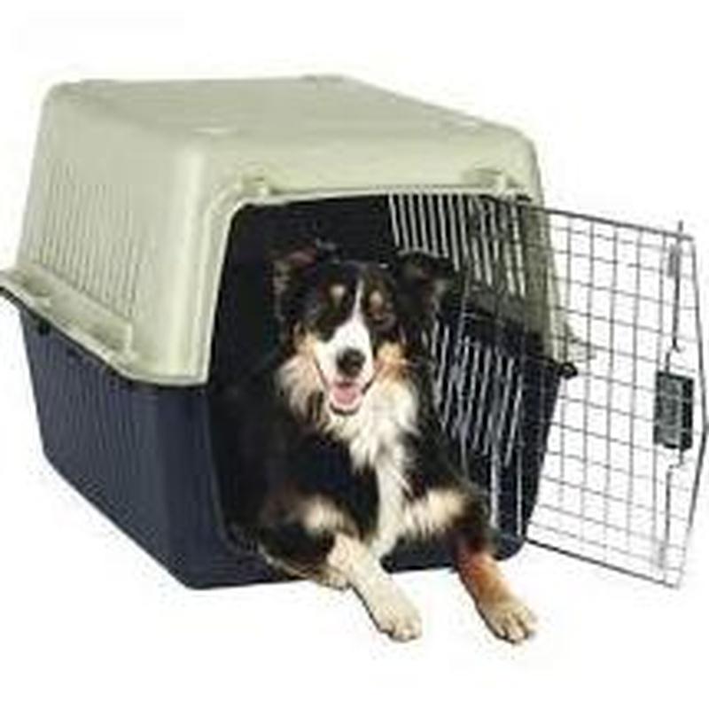 """Mascotas, """"El único requerimiento es el de cumplir la normativa vigente que regula este servicio como por ejemplo trasladar a la mascota dentro de un transportín."""""""