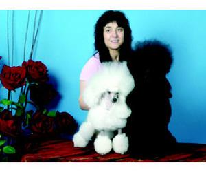 Clases de peluqueria canina