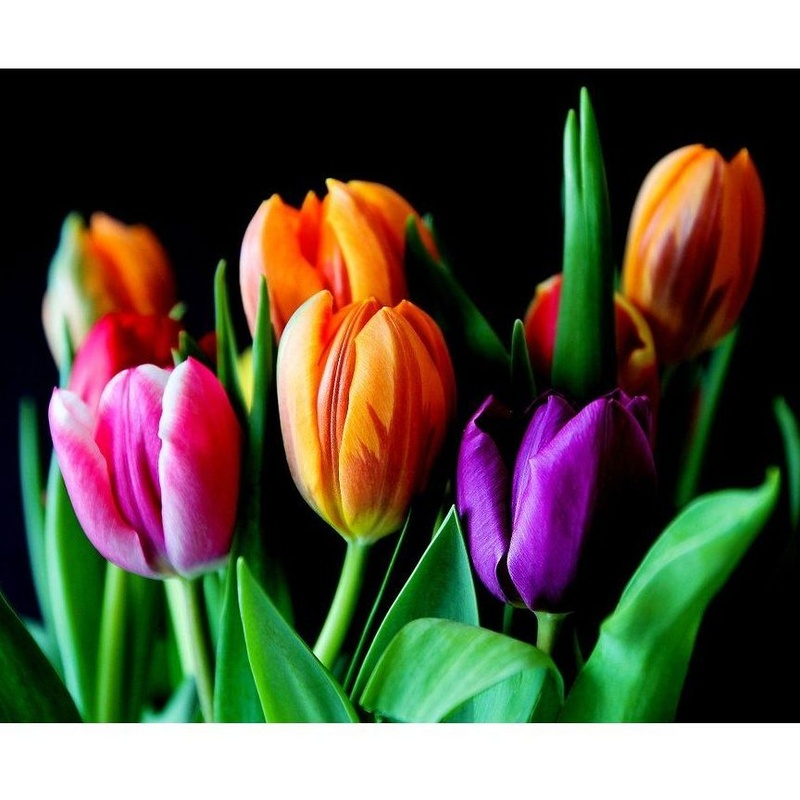 Flores: Servicios de Floristería Contreras