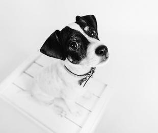 Sesiones con tu mascota