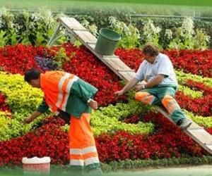 Escarificados y regeneración de jardines
