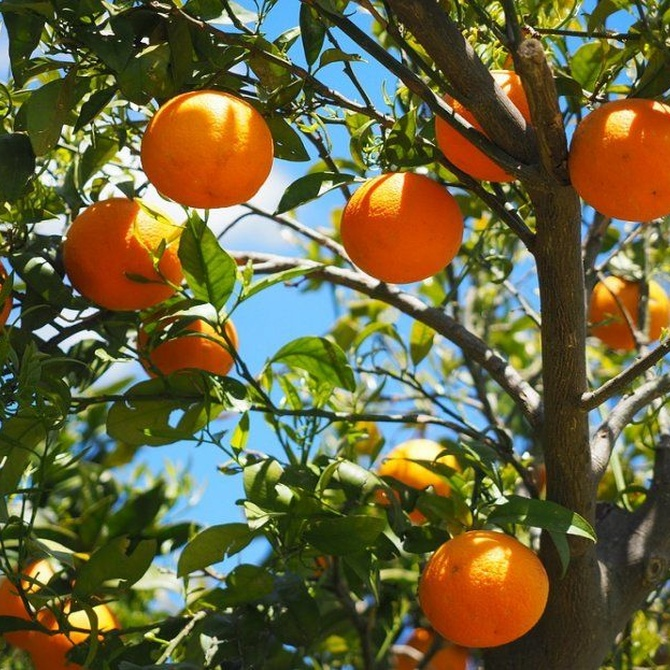 Razones por las que debes tener frutales en tu jardín