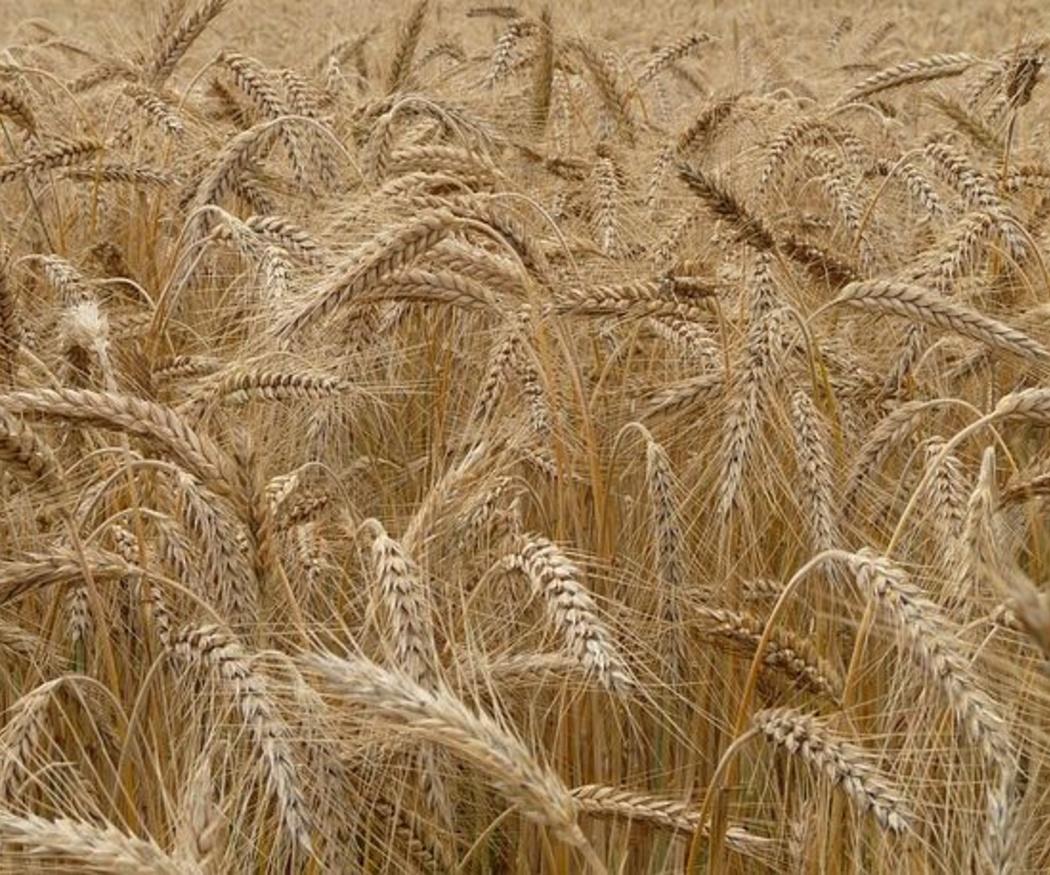 5 aspectos sobre el almacenamiento de cereal