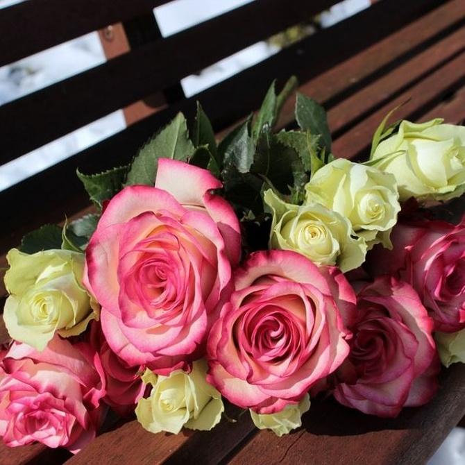 Diferentes tipos de rosas