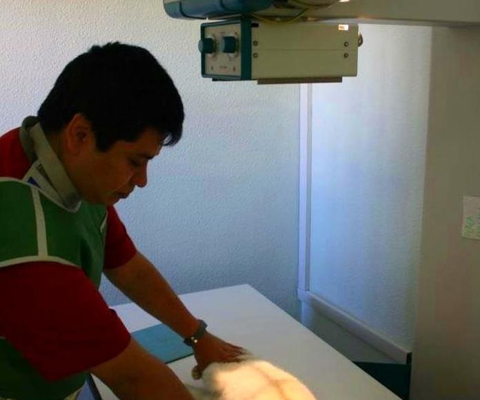 Novedad: Radiologia digitalizada: Servicios de Les Fonts Veterinaria