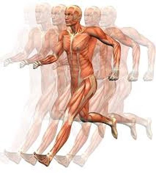 Fisioterapia deportiva: Servicios de Fisiocentre Salut