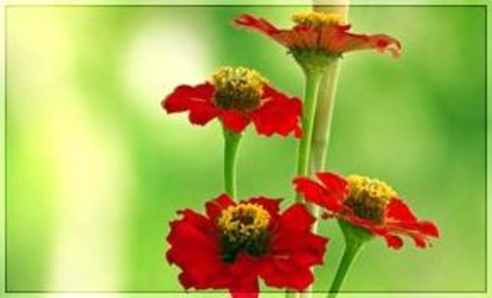 Perfumes: Productos de Natur Sandoval