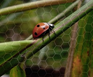 Cada vez hay menos insectos en el mundo (y esto podría ocasionar un colapso planetario)