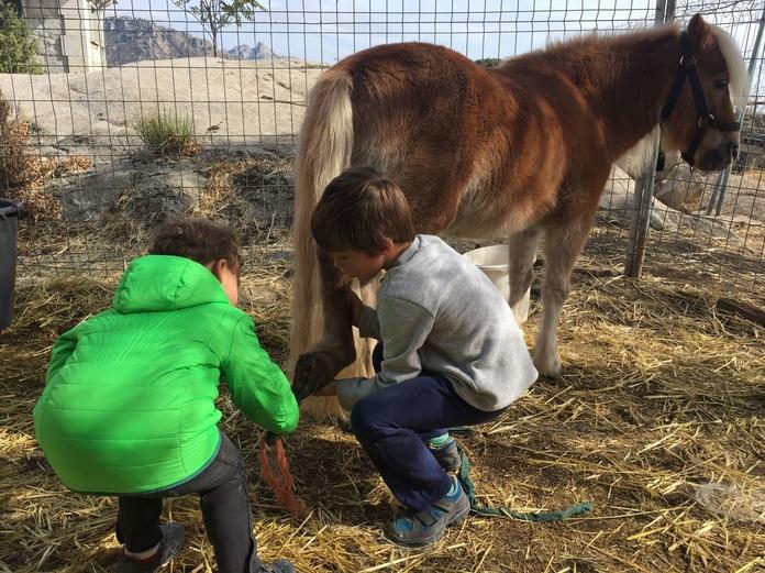 Animamos a los niños desde los 3 años a cuidar su caballo.