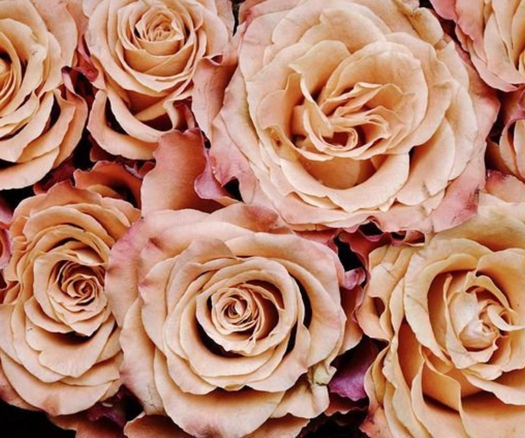 ¿Cuándo y por qué regalar flores?