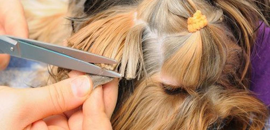 Peluquería canina en Arensy de Mar
