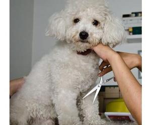 Servicios veterinarios  : Centro Veterinario Ciempozuelos