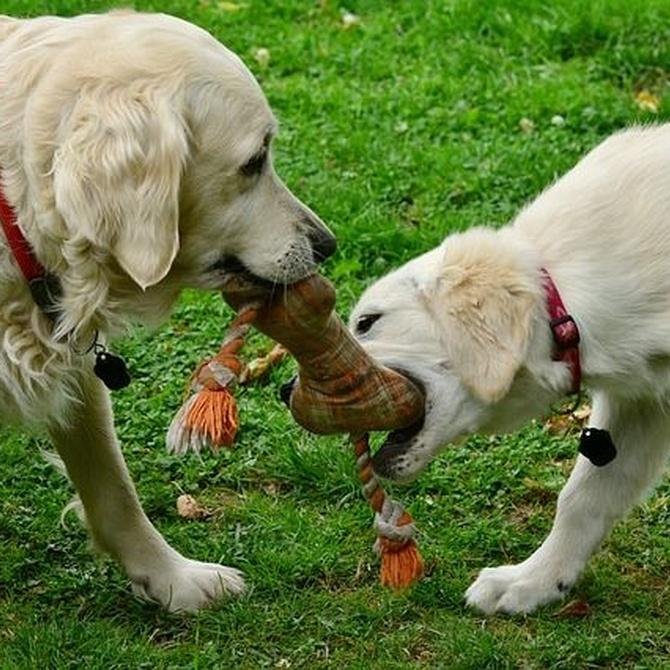Una dentadura sana para tu mascota