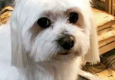 Perruqueria canina