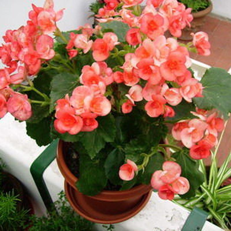 Plantas: Productos de ARTE Y JARDIN