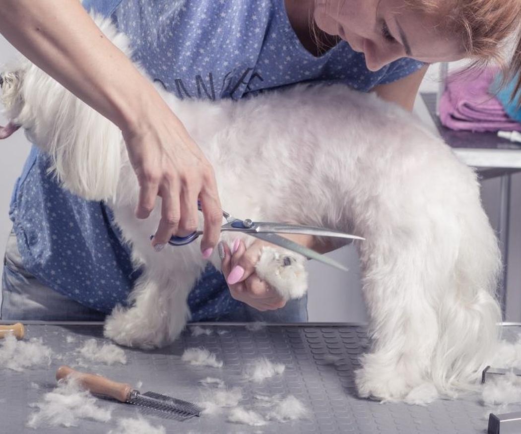 Ventajas de la peluquería canina