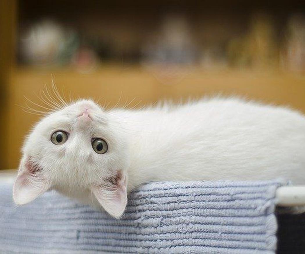 ¿Qué sabes de las bolas de pelo en los gatos?