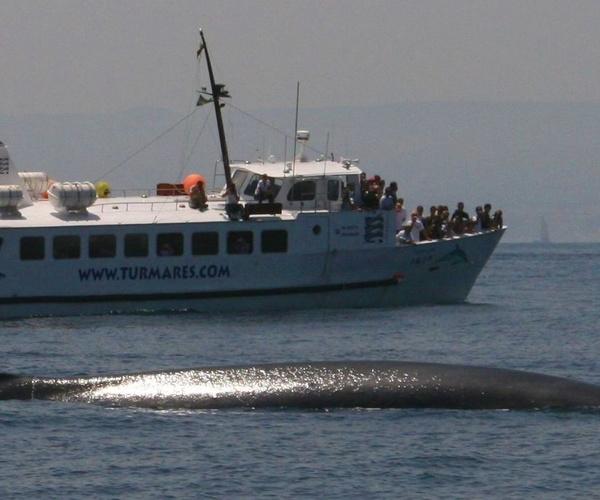 Monitor de Avistamiento de Cetáceos