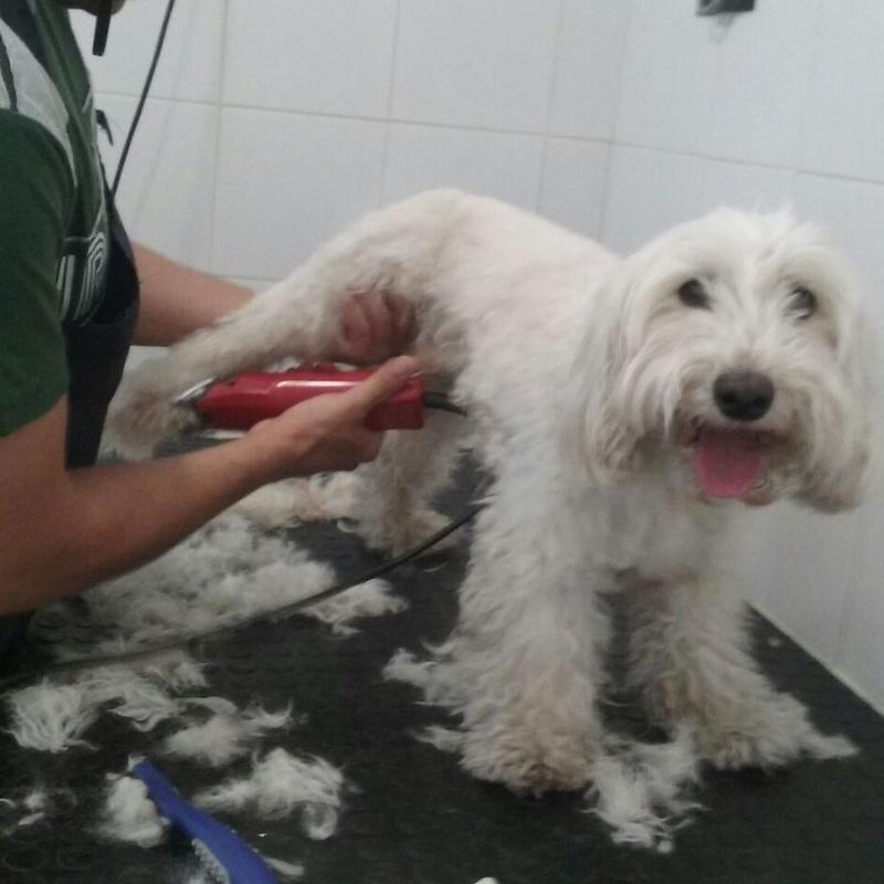 Peluquería canina y felina 3.: Servicios  de Mastervet  Mirasierra