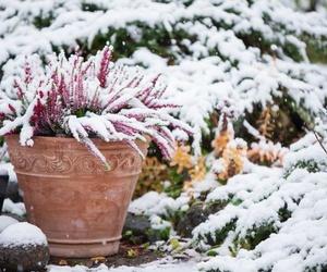 El cuidado de flores y plantas en invierno
